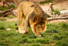 Lion-Country-Safari-8